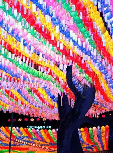 Lotus Lanterns 2008