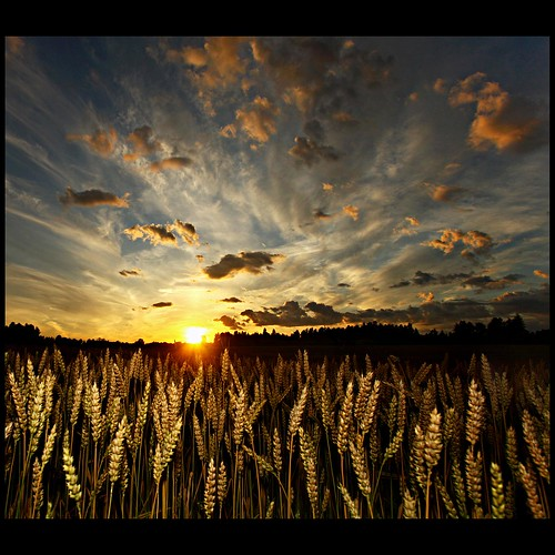 sunset sun nature clouds wheat flash wide wideangle crops 40d aplusphoto theunforgettablepictures theperfectphotographer blogosophy mackepackeblogspotcom —obramaestra—