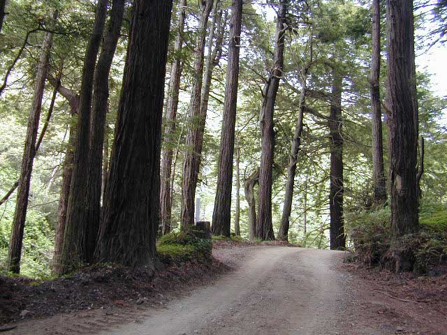Road of Redwoods
