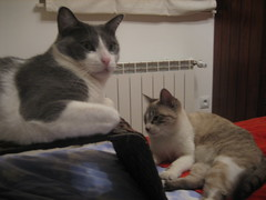 Cats @ $HOME