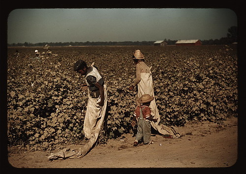 Day laborers picking cotton, near Clarksdale, Miss. (LOC)