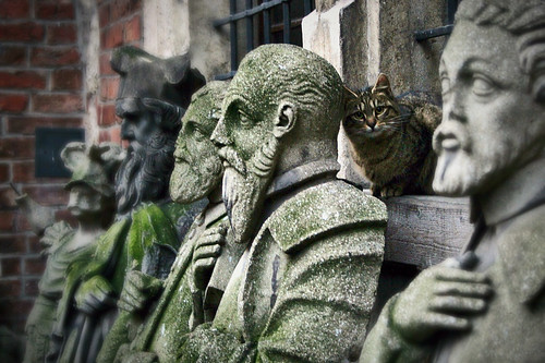 krakow: the cat among the saints