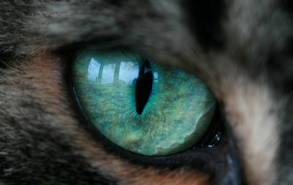 Как сделать свои глаза кошачьими 898