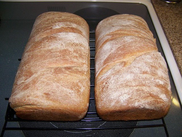 Day 4: Whole Wheat Bread
