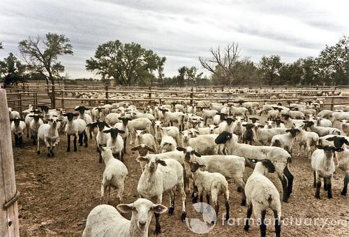 шарики короткий бизнес план овцеводства таблицы фото польше, или отправляясь