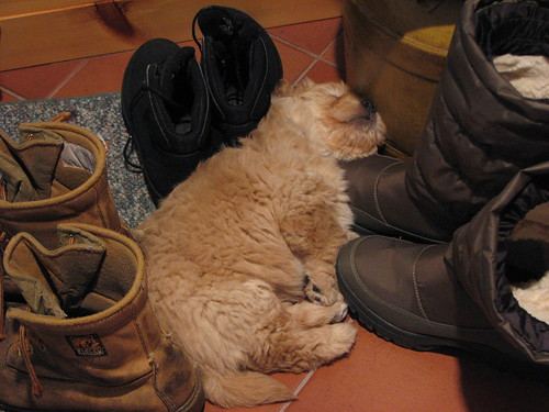 Peace amongst the boots