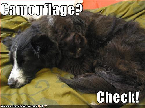 funny-pictures-cat-dog-camouflage