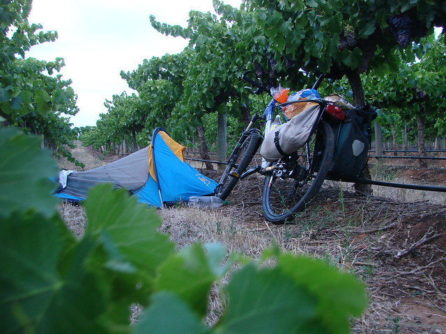 sleeping in the vineyard by Velaia (ParisPeking) on flickr