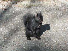 tasmanian devil(0.0), pet(0.0), animal(1.0), squirrel(1.0), mammal(1.0), fauna(1.0), wildlife(1.0),