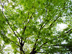branch, leaf, tree, sunlight, green, temperate broadleaf and mixed forest,