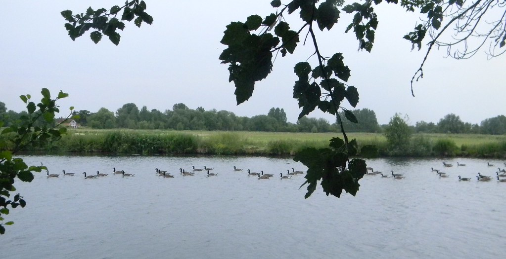 Goose navy Shiplake to Henley