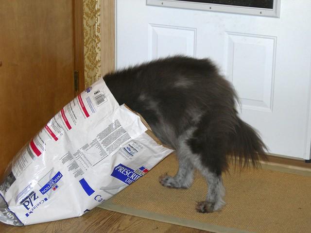 Big Kibble Dog Food For Sensitive Stomachs