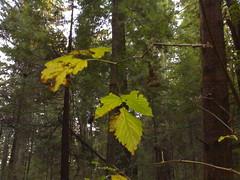 Closeup leaves