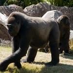 Los Angeles Zoo 083