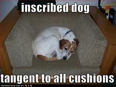 canine geometry