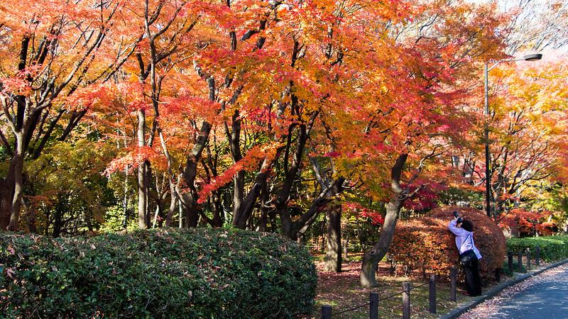 kitanomaru-park-13