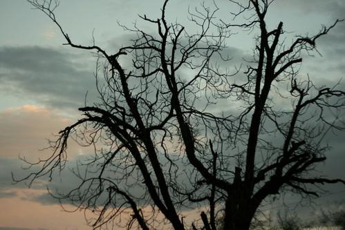 sunset arizona tree curves