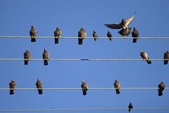 fence(0.0), swallow(0.0), bird migration(0.0), animal migration(1.0), animal(1.0), wing(1.0), line(1.0), bird(1.0),