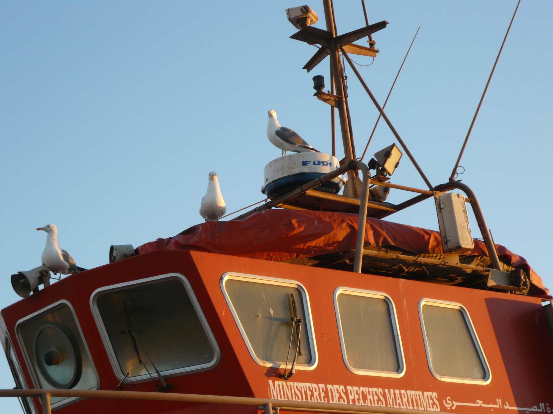 Sauvetage maritime au Maroc / service de recherche et de sauvetage  - Page 2 2121772623_d7b73b9494_o