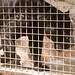 San Diego Zoo 037