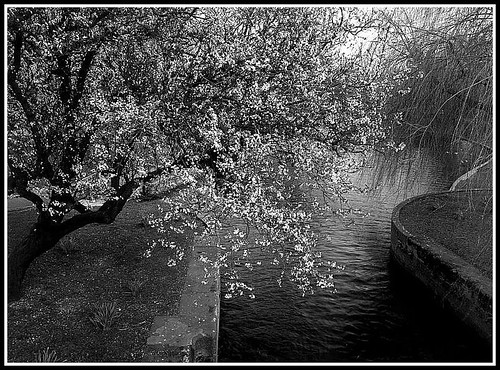 black and white tree over canal