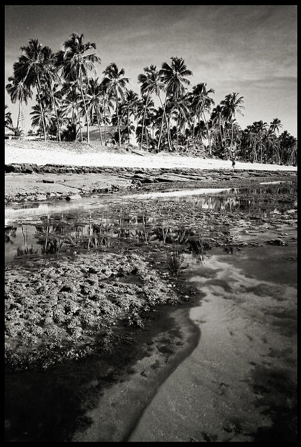 Praia de Forte - Tide Out - Yashica T4 Zoom 28mm