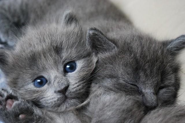 Cat S Site Rebuy De
