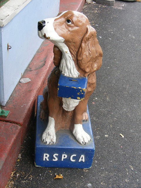 Dogs Full Of Money Boxes A Gallery On Flickr