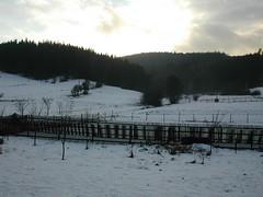 2005-12-15 Czech Republic