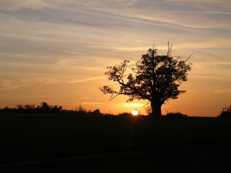 Sundown, Knole Park Sevenoaks circular