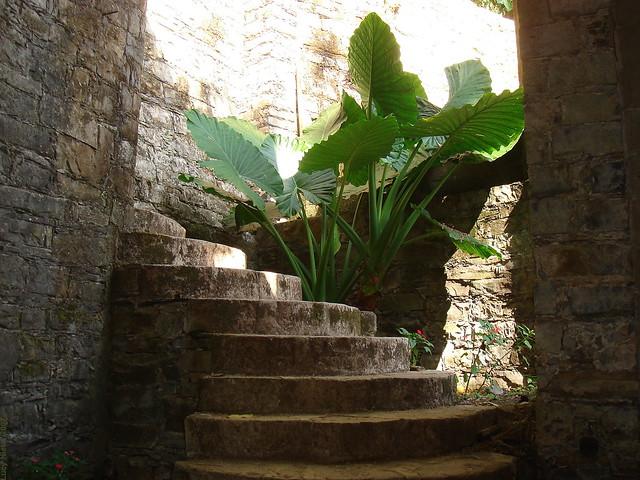 Las Pozas - Xilitla SLP México 2007 7880