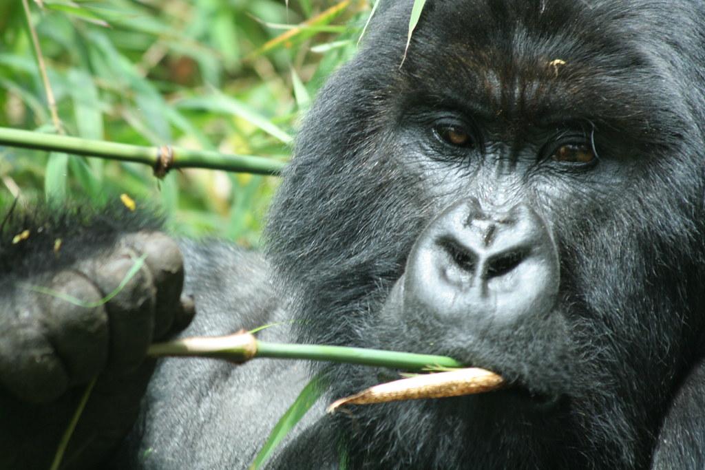 Rwanda047