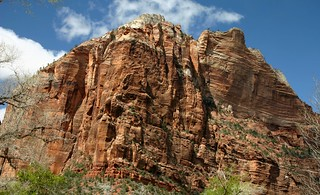 View from the canyon floor in Zion Canyon