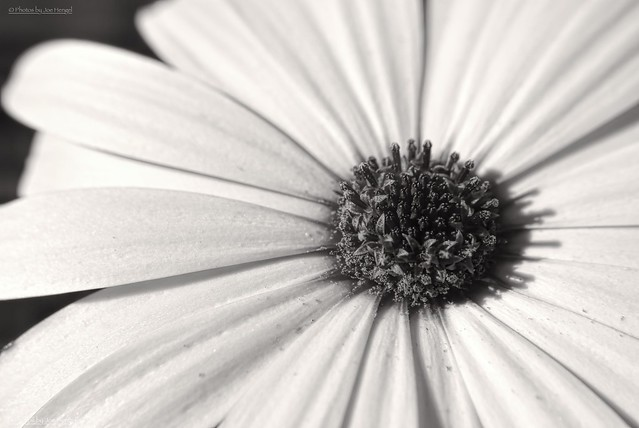 Colorless....