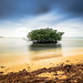 Mangrove by CManchegoPhoto