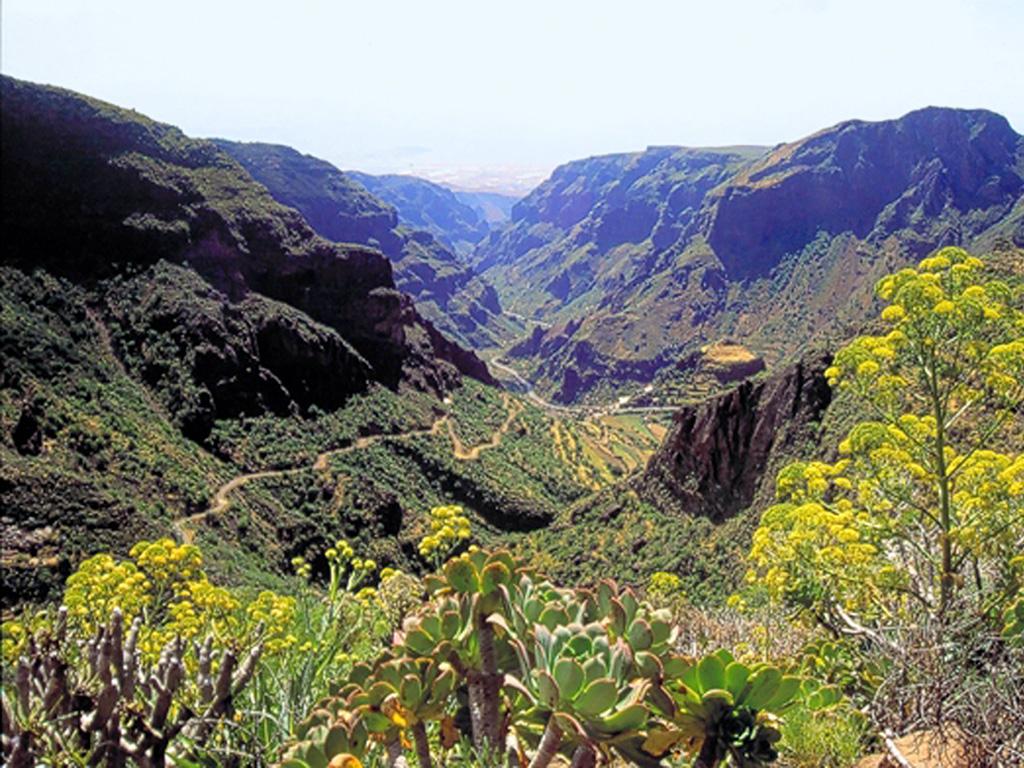 Barranco de Guayadeque - JungleKey.es Imagen #50