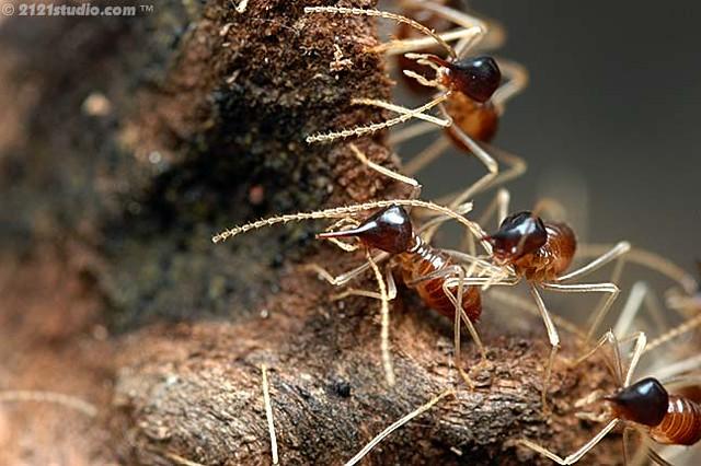 Www Termite Com Fr Calais 1316