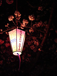 lanterns with blossoms at night