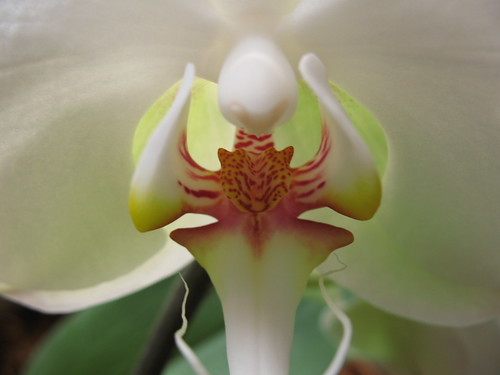 Orchid by The Loopweaver