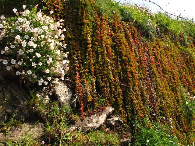 Cascading Plants Flickr Photo Sharing