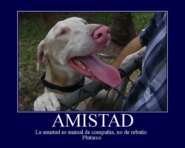 Header of Amistad