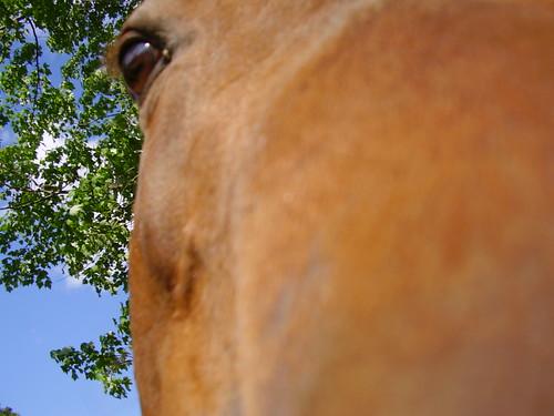 Misha Up Close