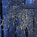 hoar frost 802 by Doug Lloyd