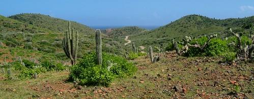 ocean winter vacation cactus desert scenic aruba caribbean fabulous tropics