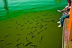 Fishway