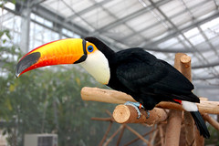 coraciiformes(0.0), animal(1.0), hornbill(1.0), wing(1.0), toucan(1.0), fauna(1.0), beak(1.0), bird(1.0), wildlife(1.0),