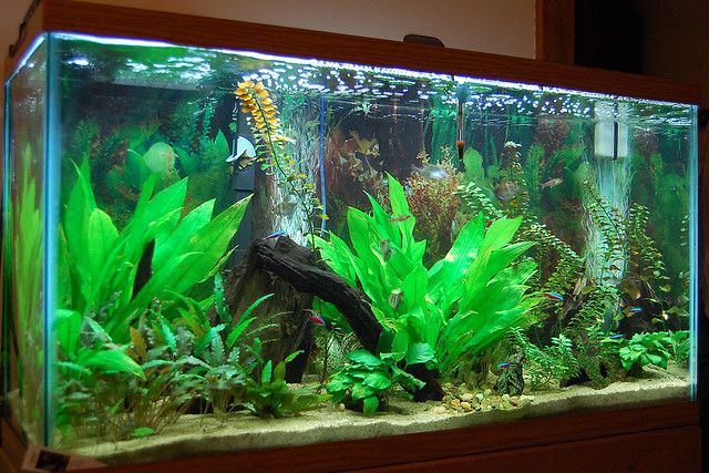 Freshwater fish 3 gallon freshwater community starter for 38 gallon fish tank