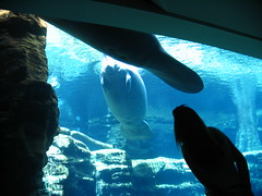 animal, marine mammal, marine biology, whales, dolphins, and porpoises, underwater,