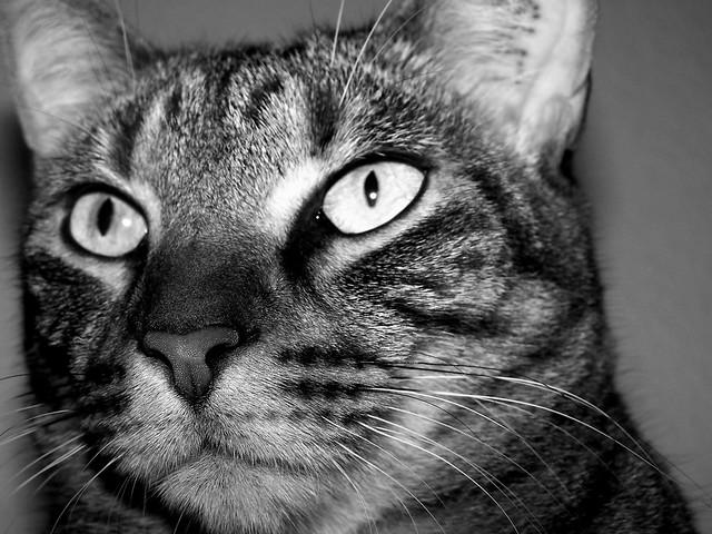Napoleon Katze