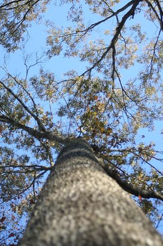trees flora canonrebelxt whiteoakplantation